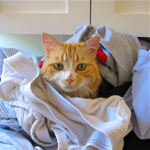 Daisy laundry3